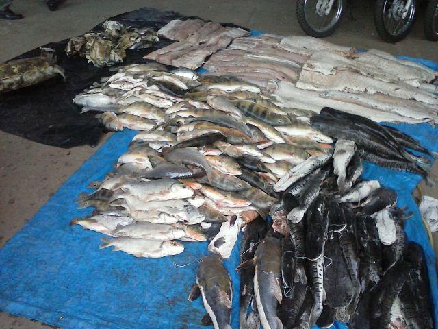 peixe6