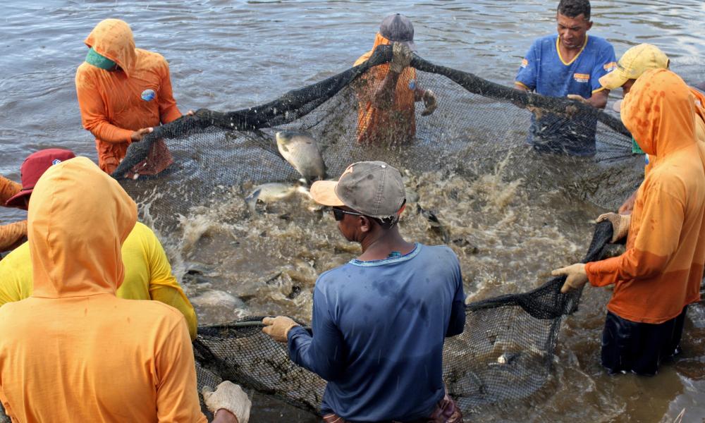 441766_1000 Tocantins é destaque entre os poucos estados que conta com um estudo aprofundado sobre produção pesqueira e suas potencialidades