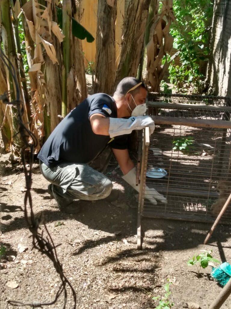 Filhote-onca-parda-2-768x1024 Filhote de onça parda é resgatado pelo Naturatins em Natividade