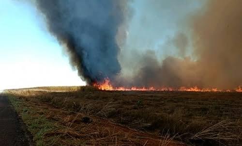 images-8 Conselho de Meio Ambiente mantém multa superior a R$ 1 milhão a empresa agrícola pela prática de incêndio em Pedro Afonso